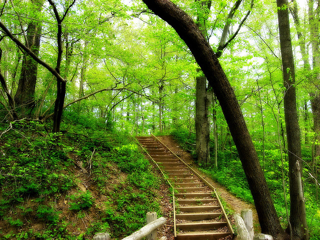 green-path-640.jpg