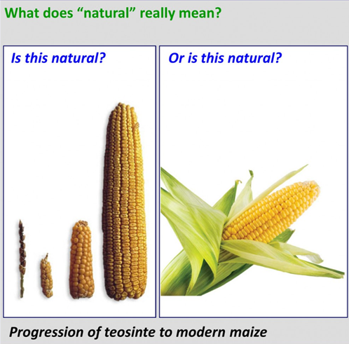 corn natural.PNG