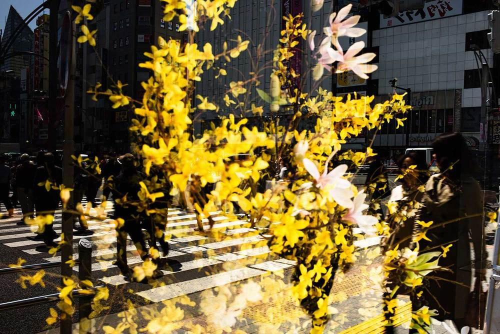 Light&blossom-LELEU-18.jpg