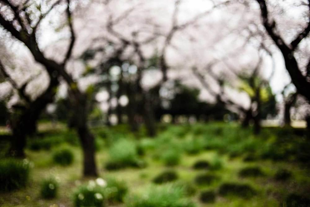 Light&blossom-LELEU-20.jpg
