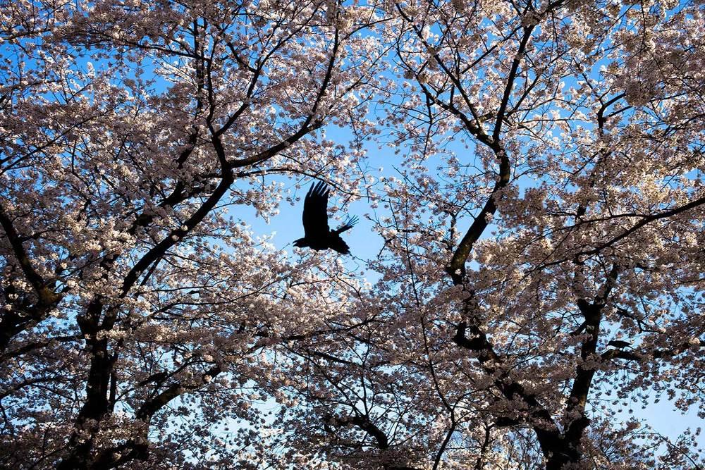 Light&blossom-LELEU-21.jpg