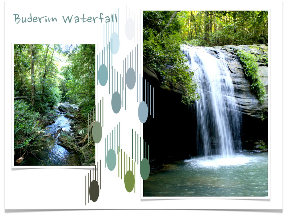 Buderim Waterfall blog copy.jpg