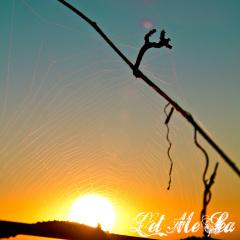 20-x-20-web-spider-sun.jpg