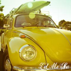 20-x-20-web-yellow-beetle1.jpg