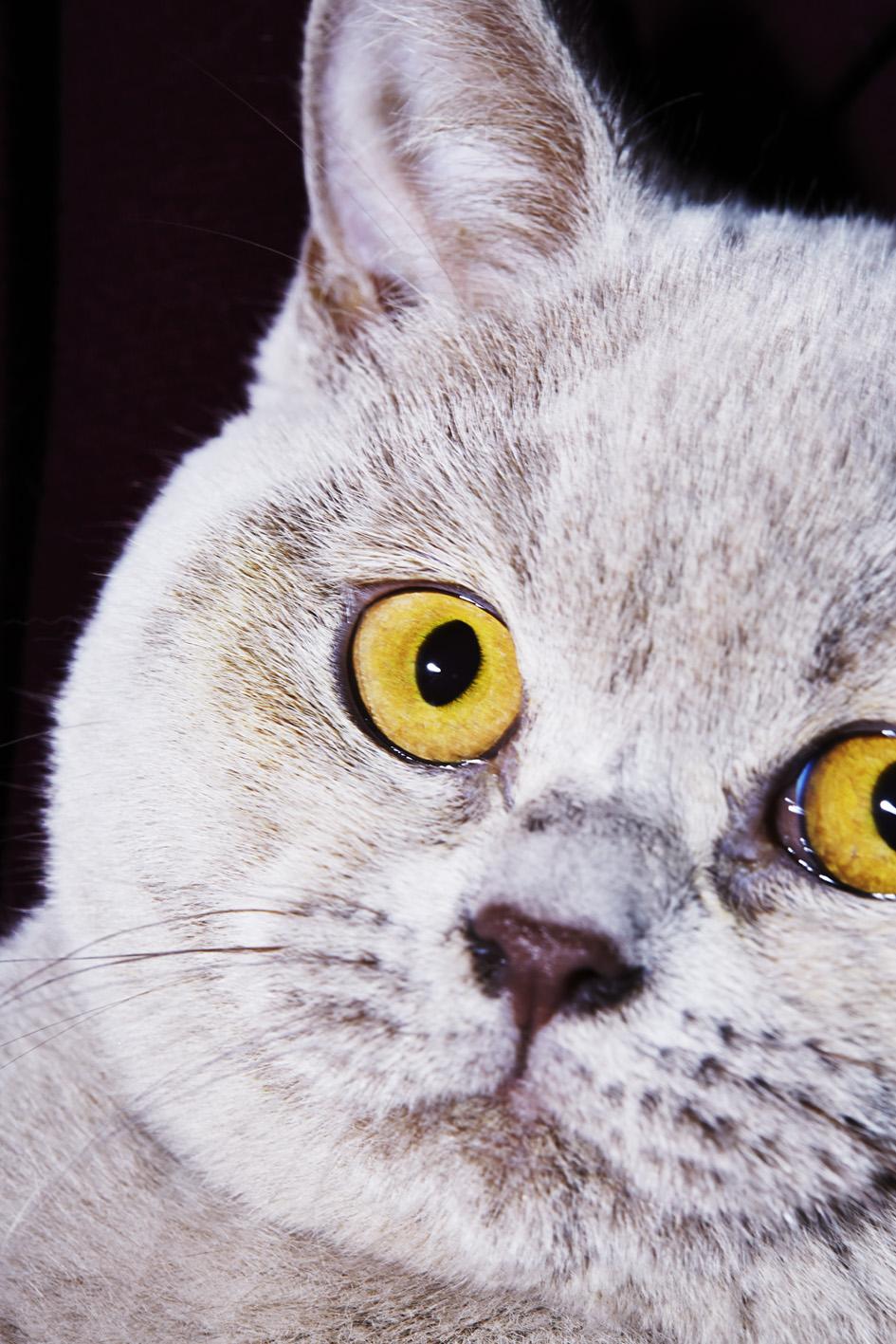 julia_kennedy_puss_puss_02.jpg