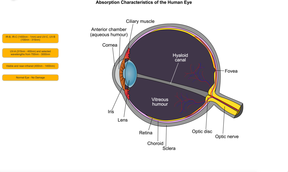 Absorption Characteristics of the Human Eye
