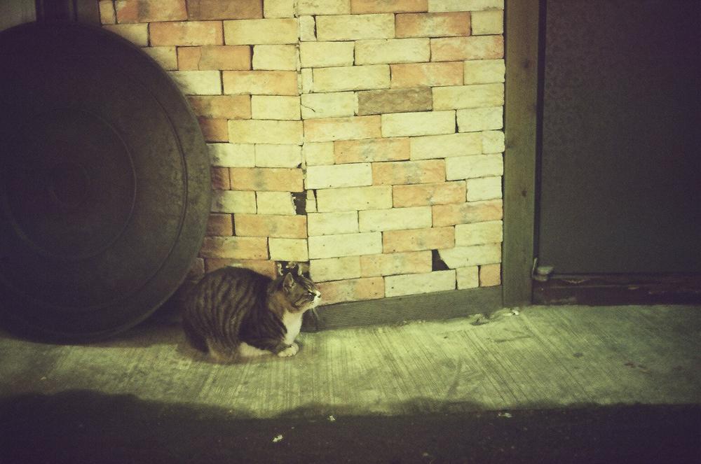 """""""The Koyangi"""" - A cat sheltering from the rain. Seoul, Korea.  Canonet QL17, Kodak 200 ColorPlus"""