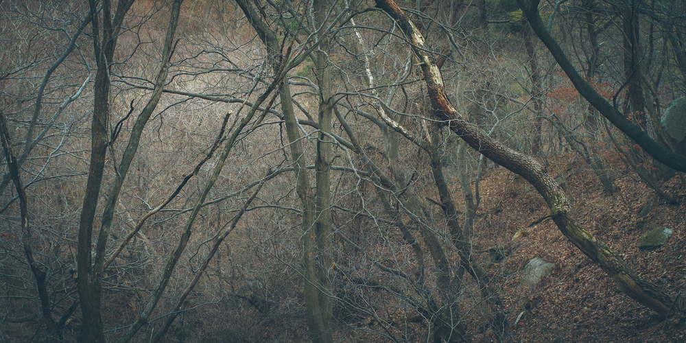 gyeongju trees-11.jpg