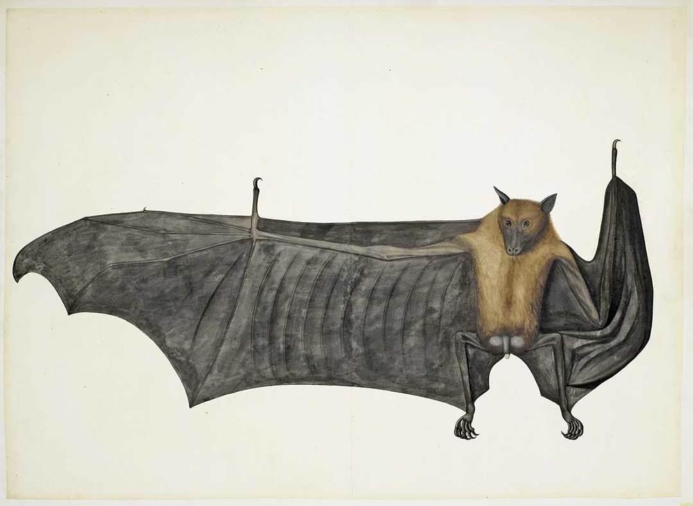 bat copy.jpg
