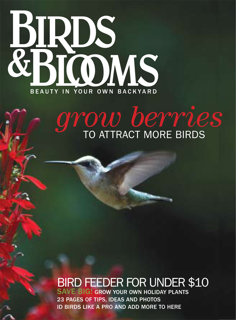 Birds & Blooms redesign, prototype cover