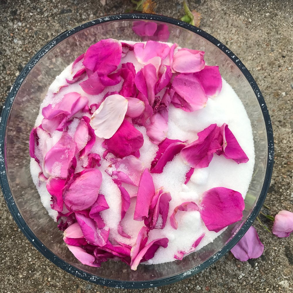 Recipe for rose sugar - hang out with your mother on the coast of Saint Mary's Bay, collect wild roses. Place in sugar.