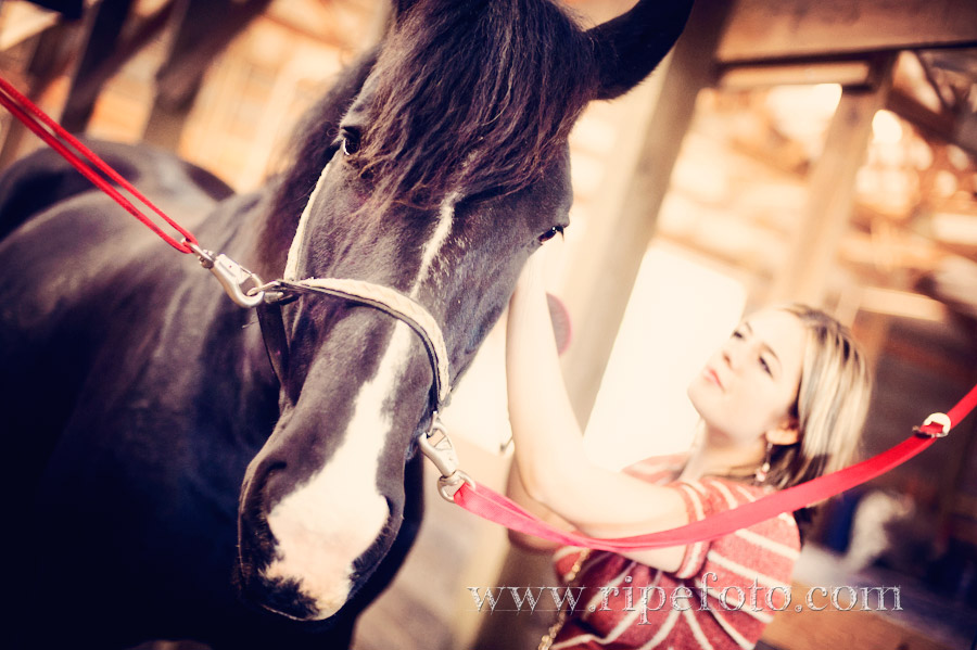 Portrait of teen girl and horse by Ripe Photography.
