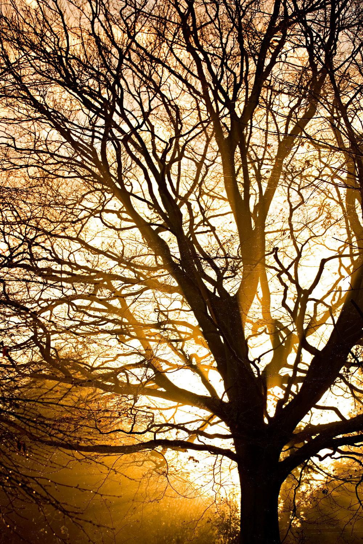 Dawn-Web.jpg