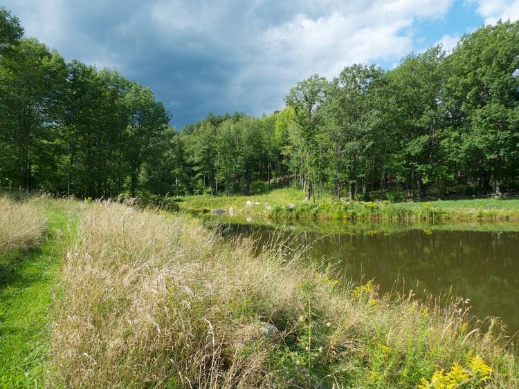 Kolam di Derbyshire Farn di Temple, New Hampshire, New England, Amerika Serikat.