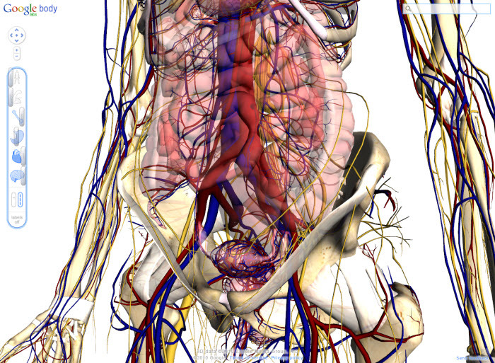 Teach your students anatomy with Google Body Browser — Edgalaxy ...