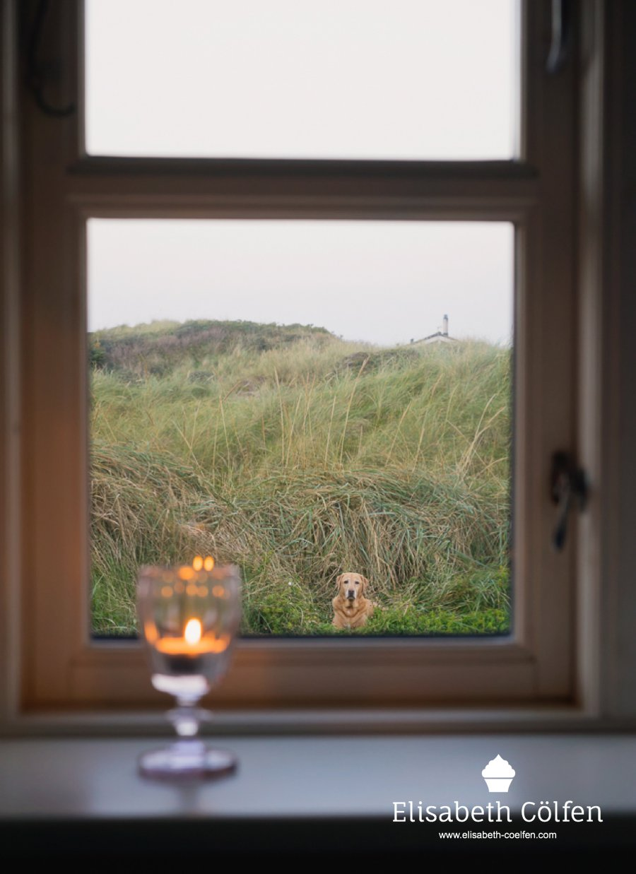 Candle in the evening in a window with a view of the dunes in Denmark and a Labrador Retriever