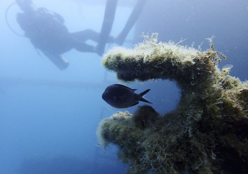 A fish swims through part of the Italian World War II shipwreck MV Probitas, with Dive Safety Officer Howard Phoenix of the non-profit RPM Nautical Foundation in the background. On the seabed off the rugged shores of Albania, one of the world's least explored underwater coastlines, lies a wealth of treasures. Ancient amphorae that carried olive oil and wine; wrecks with hidden tales of heroism and treachery from two world wars; spectacular rock formations and marine life. (AP Photo/Elena Becatoros)