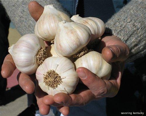 Leo Keene holds his beautiful Blue Moon garlic
