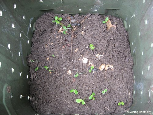 Hmmmm. A few sprouts