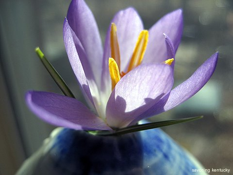 Once the first crocus blooms, something will be in bloom until at least November, 2011