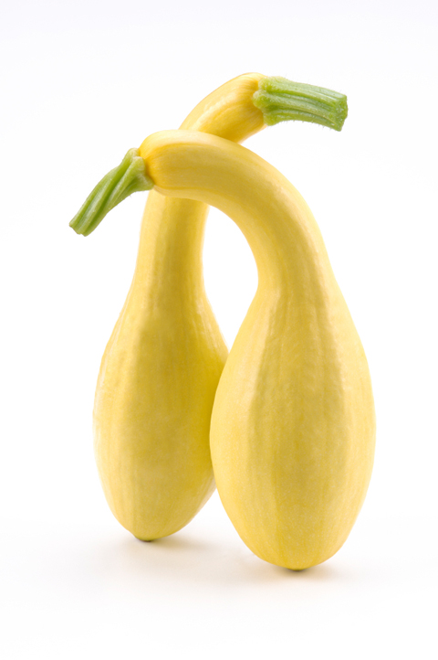 Summer Squash - Elegant Yellow Crooknecks