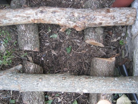 White Oak (top) and Sugar Maple (bottom) logs with Shiitake spawn drilled in