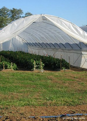Hoop House at UK South Farm