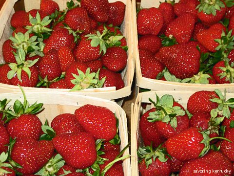 Kentucky Strawberries