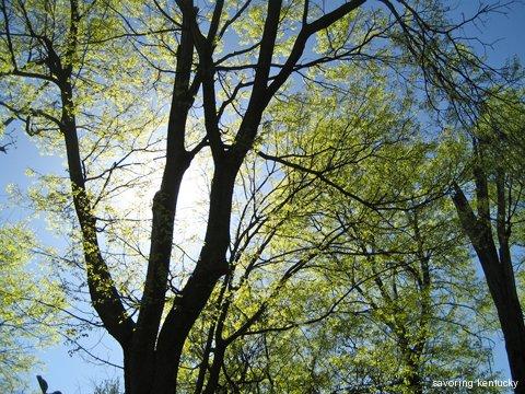 Spring Sun, Spring Leaves