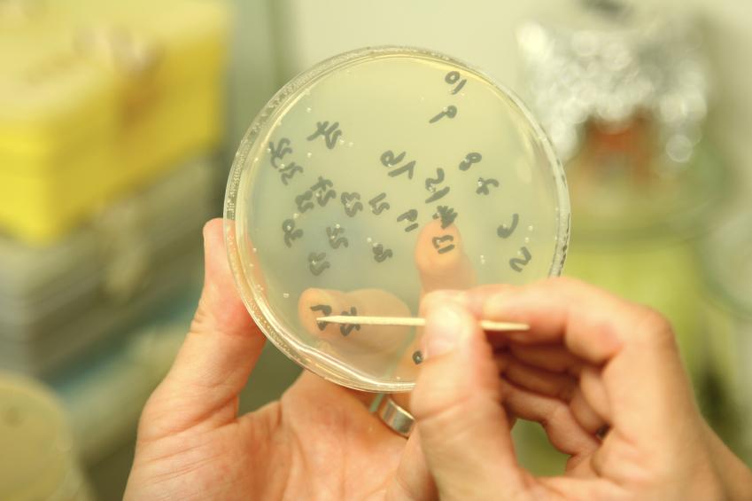 Bacteria in culture