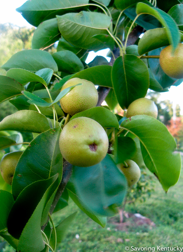 Neighborhood apples