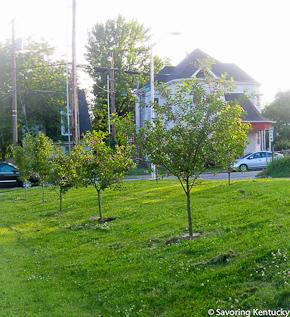 Neighborhood fruit trees 2012