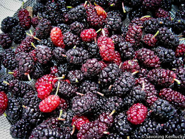 Freshly picked mulberries with stems