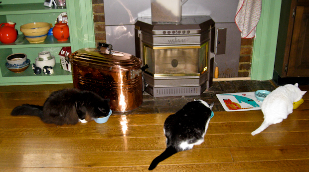The felines at Theresa's house enjoy their meals, too.