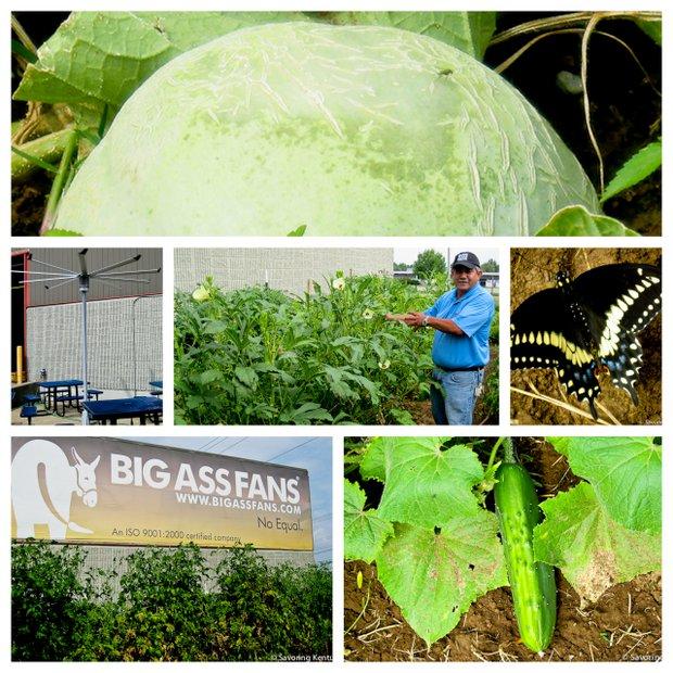 Gardening at Lexington's Big Fan Company