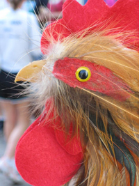Robbie, the Elmwood Stock Farm Market Rooster