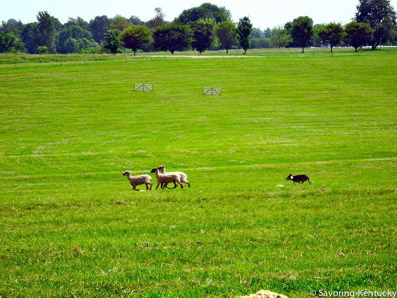 sheepandfiber.jpg