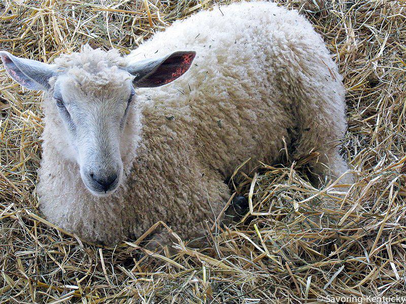 sheepandfiber-15.jpg