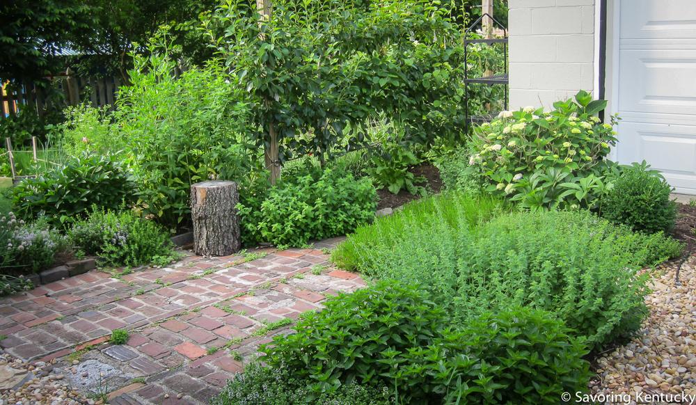 herbs-2.jpg