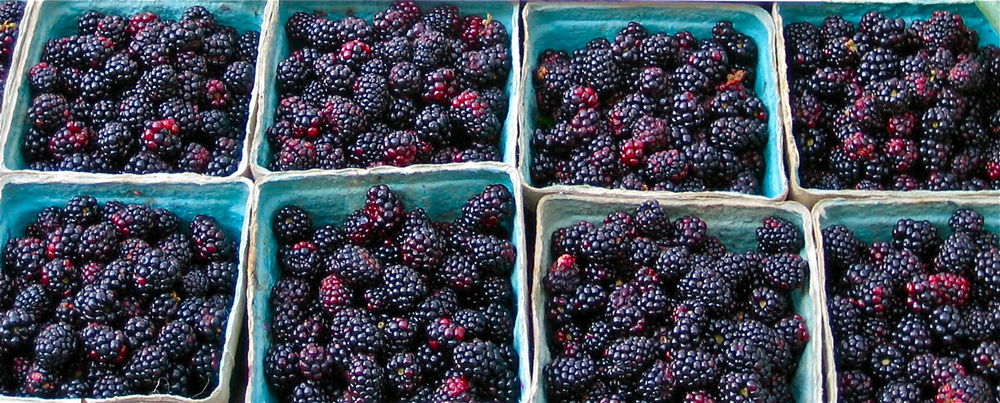 blackberries13.jpg