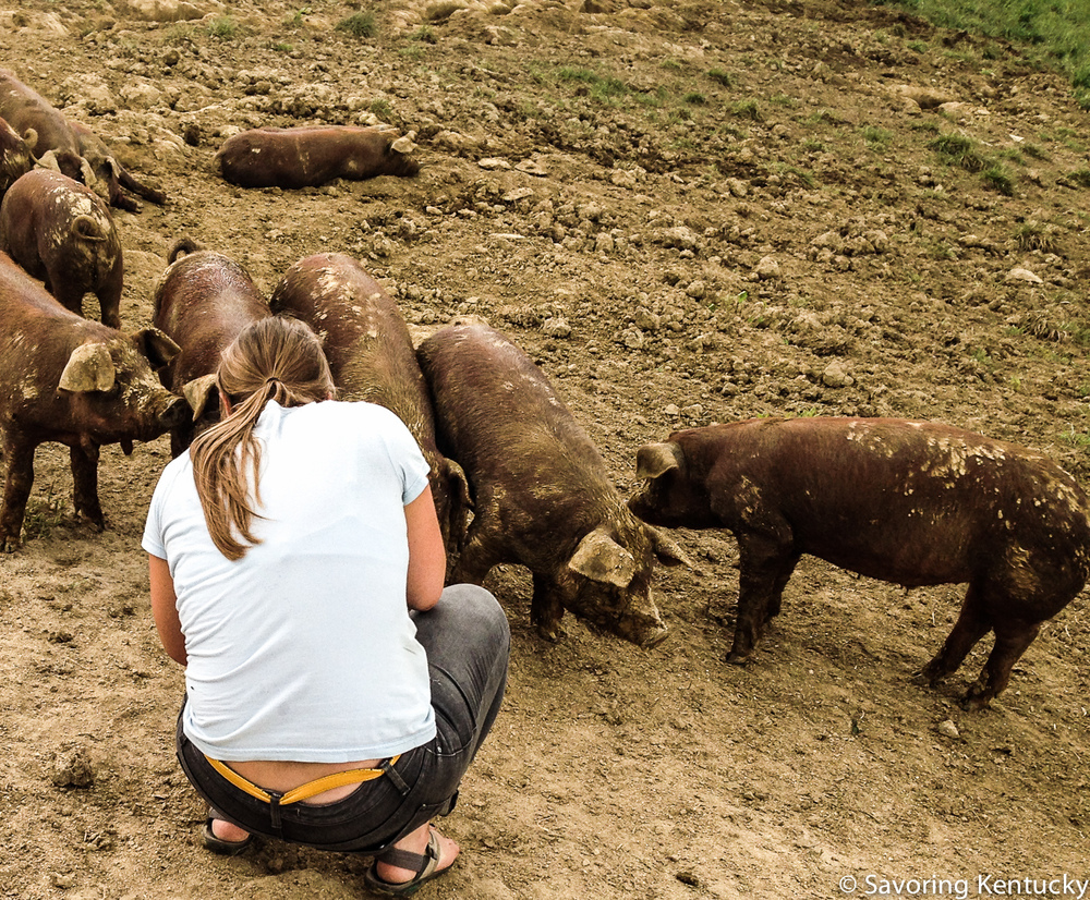 Sarah Jane communes with young, whey-fed Red Wattle pigs at Hood's Heritage Hogs in Robertson County.
