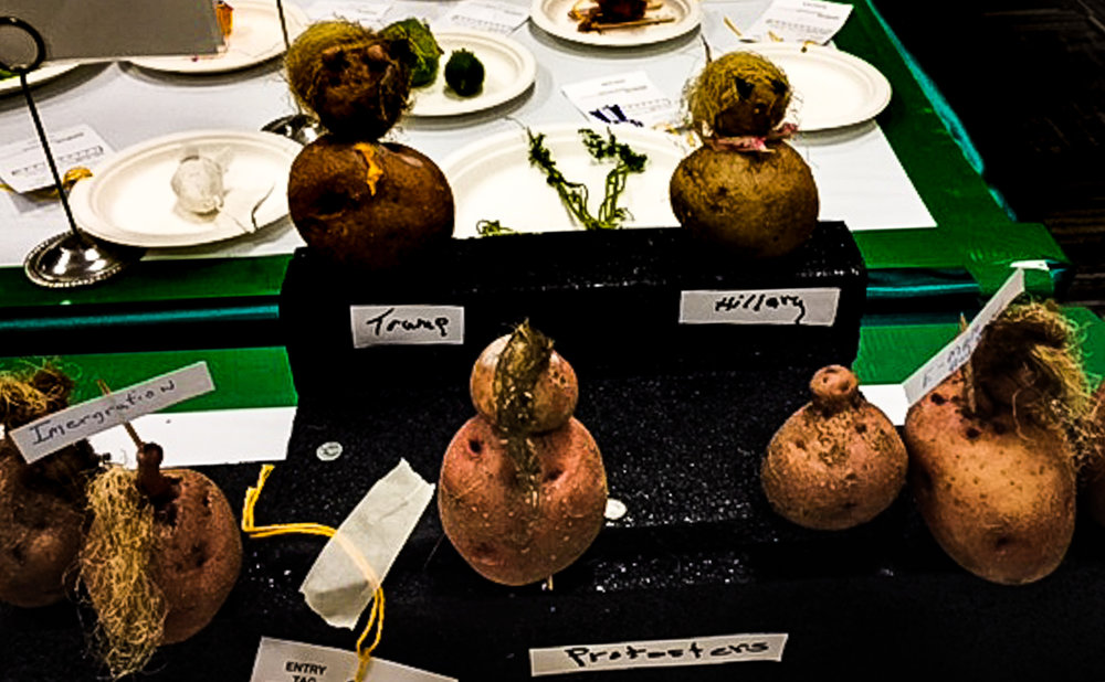 "Potato creatures as political contestants and protestors: A Kentucky State Fair ""Critters"" exhibit. Photo credit: Ouita Michel."