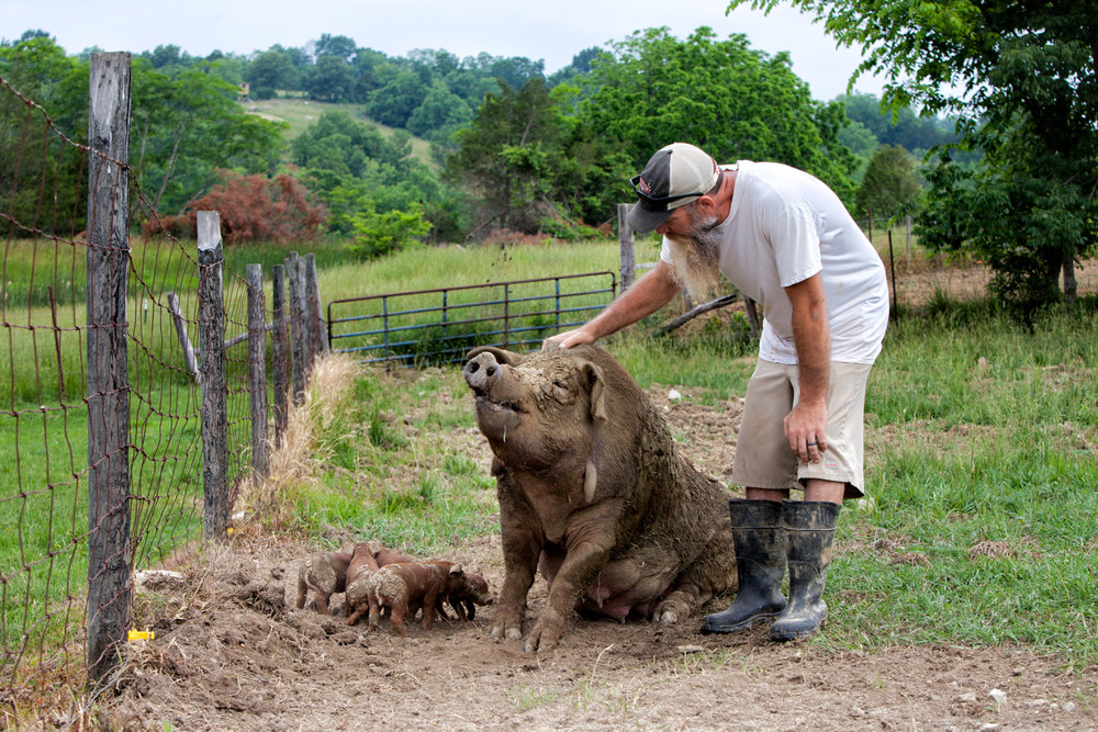Travis Hood and Lucy, his first Red Wattle sow, with her 2014 summer litter. Photo by  Sarah Jane Webb : Thank you!