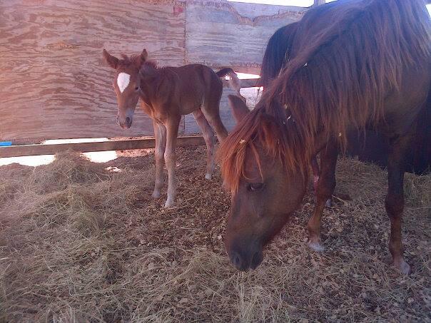 BABY HORSE2.jpg
