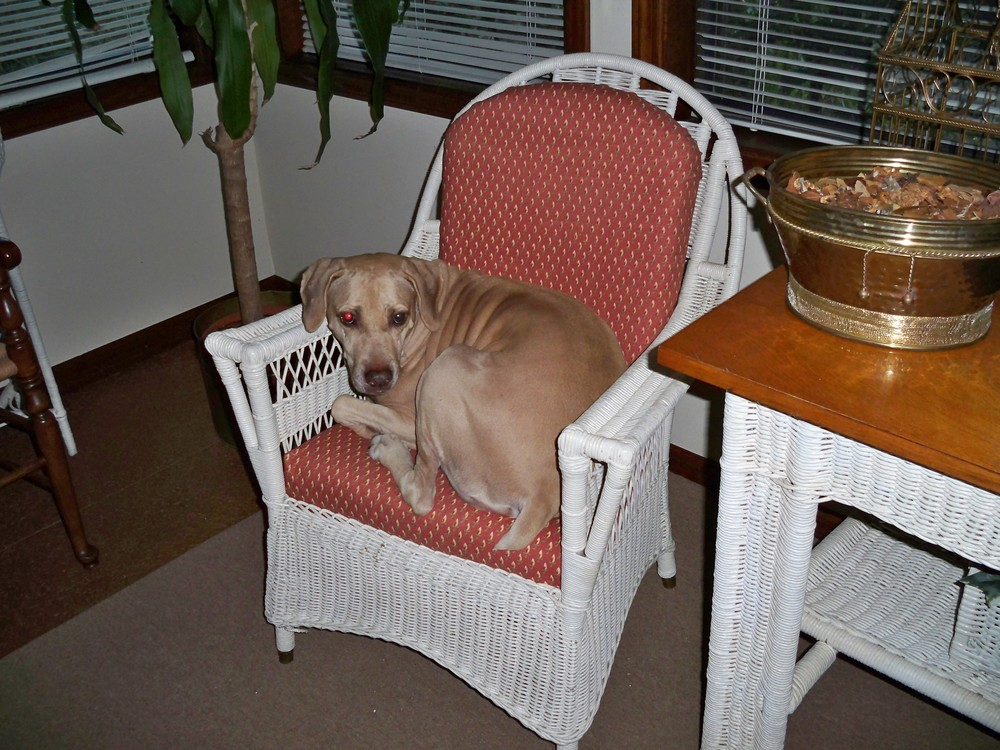 Lucy sleeping in chair.jpg