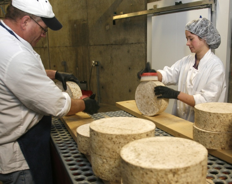 As the rind develops, cheeses are regularly brushed and turned.