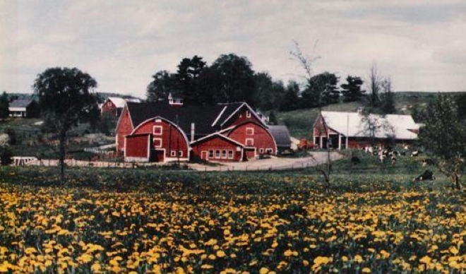 Landaff_Farm-3_web.jpg