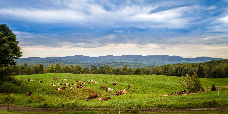 Hasil gambar untuk jasper hill farm