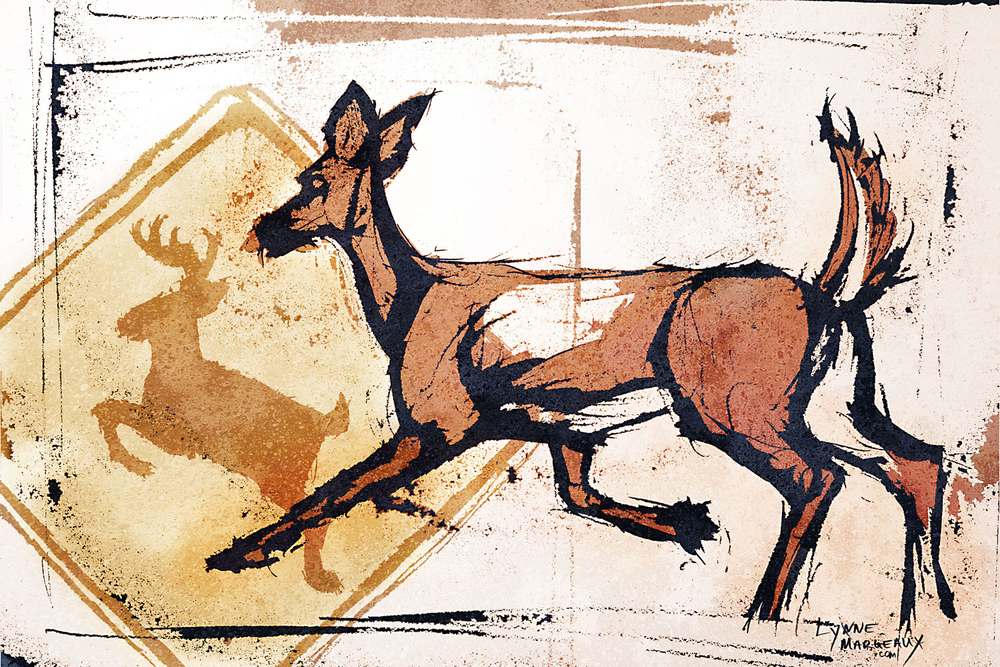 Suburban Deer 5