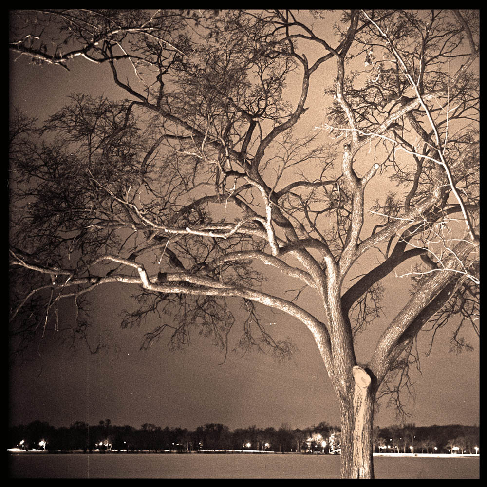 Calhoun_Tree_Winter_Night_web.jpg